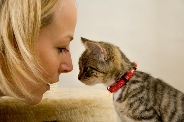 гепатовет для кошек инструкция