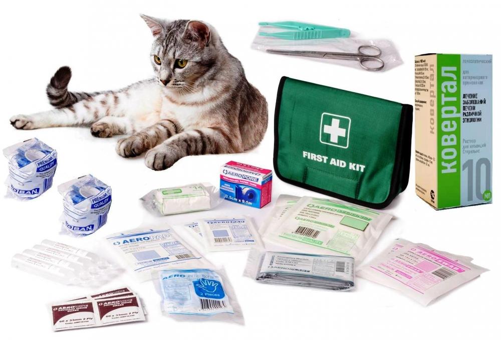 гепатит у кошек симптомы и лечение