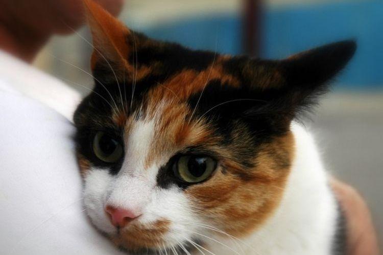 герпесвирус у кошек