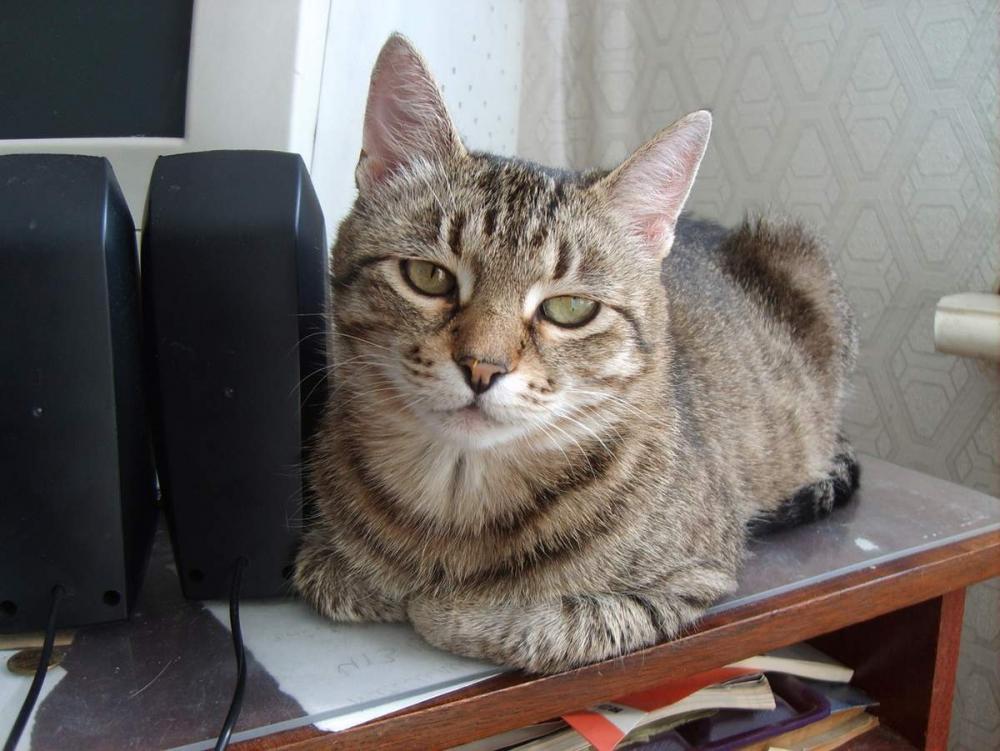 гипертиреоз у кошек симптомы и лечение