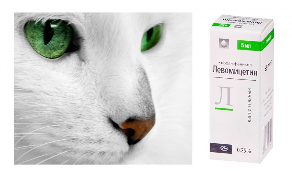капли для глаз для кошек от воспаления