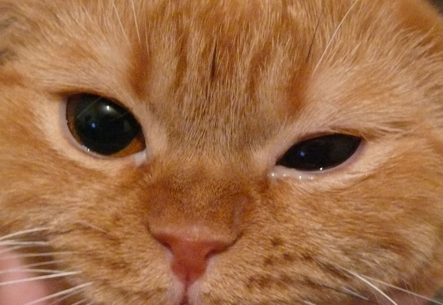 ципролет для кошек