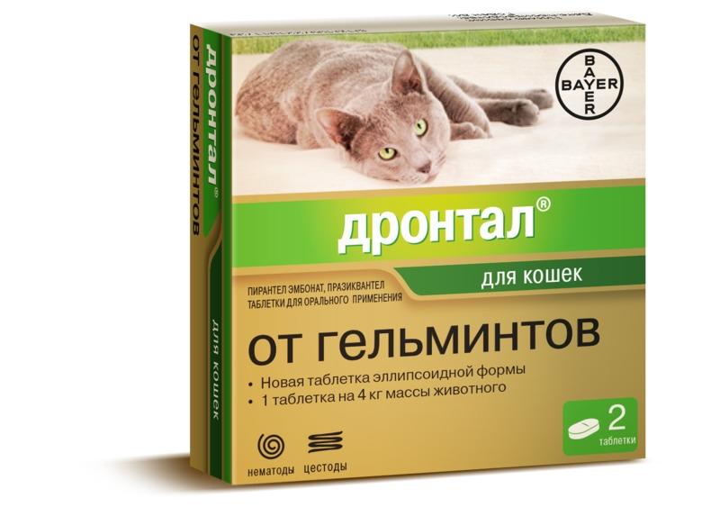 глистная инвазия у кошек