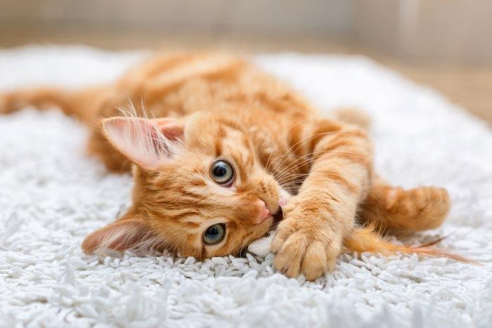 глисты у кошек фото с названиями