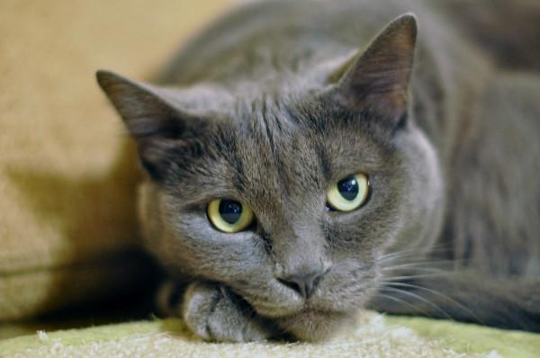 профилактика глистов у кошек