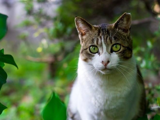 грибок у кошек