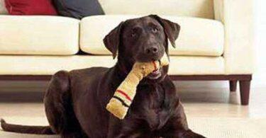 Аксессуары для собак своими руками