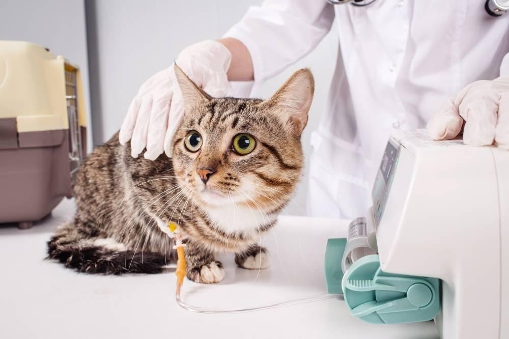 инсульт у кошек симптомы и лечение