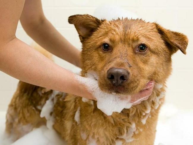 как часто можно мыть собаку шампунем