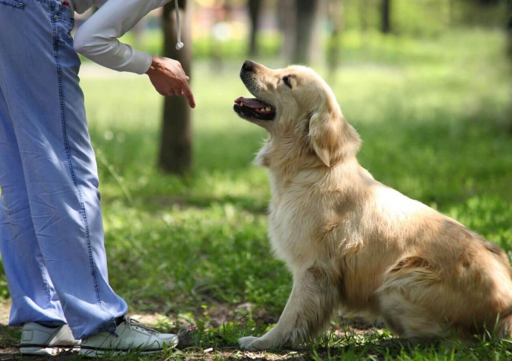 научить щенка команде сидеть