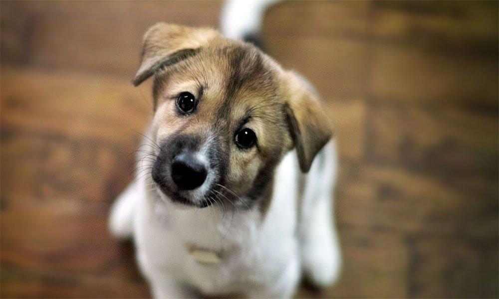 узнать сколько лет собаке