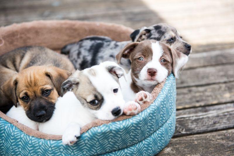 определить возраст щенка по зубам фото