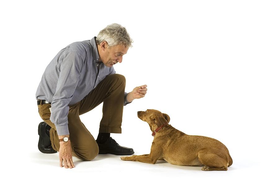 отучить собаку есть на улице
