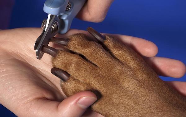 подстричь когти собаке в домашних условиях