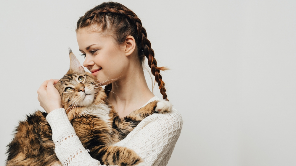 как понять что кошка беременна