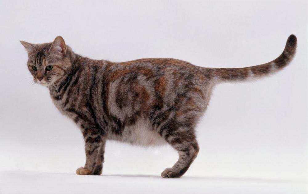 тест на беременность для кошек