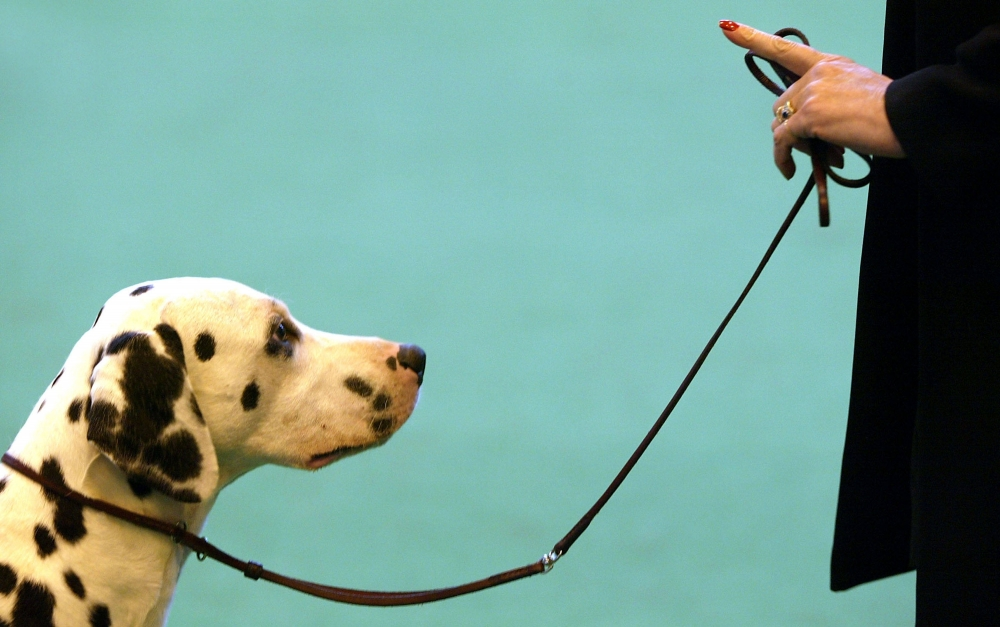 приучить собаку к поводку