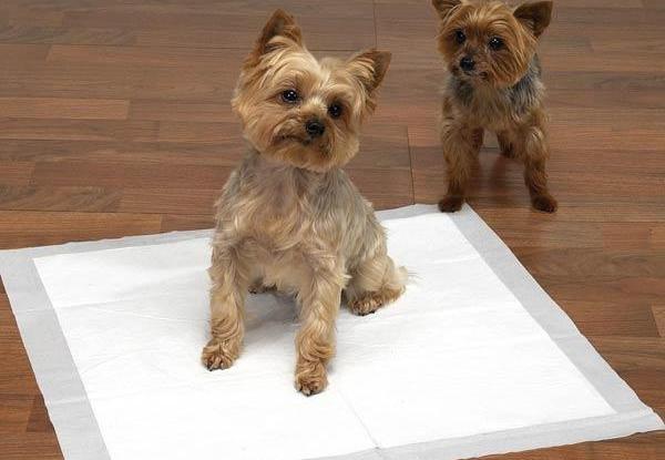 как приучить щенка писать на пеленку