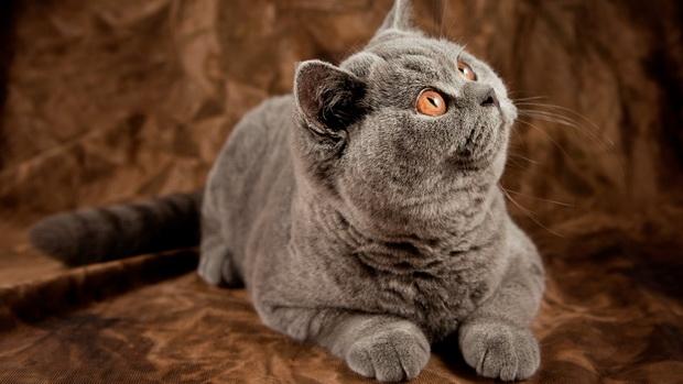 противоглистные препараты для котят