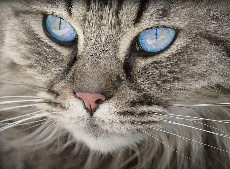 можно ли глистогонить кормящую кошку