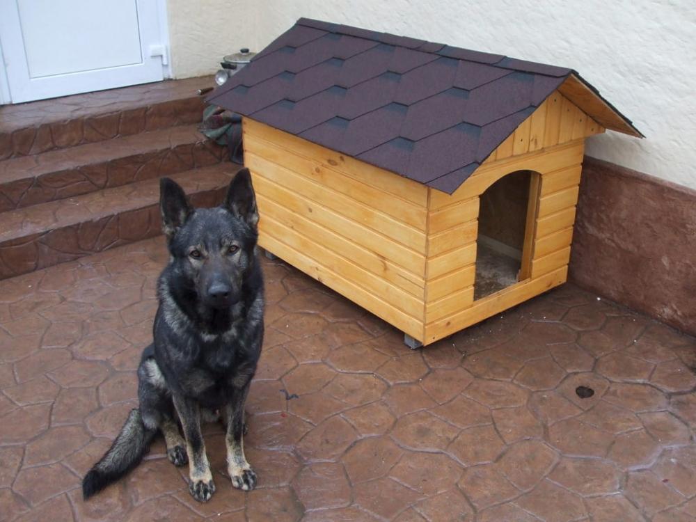 построить будку для собаки своими руками