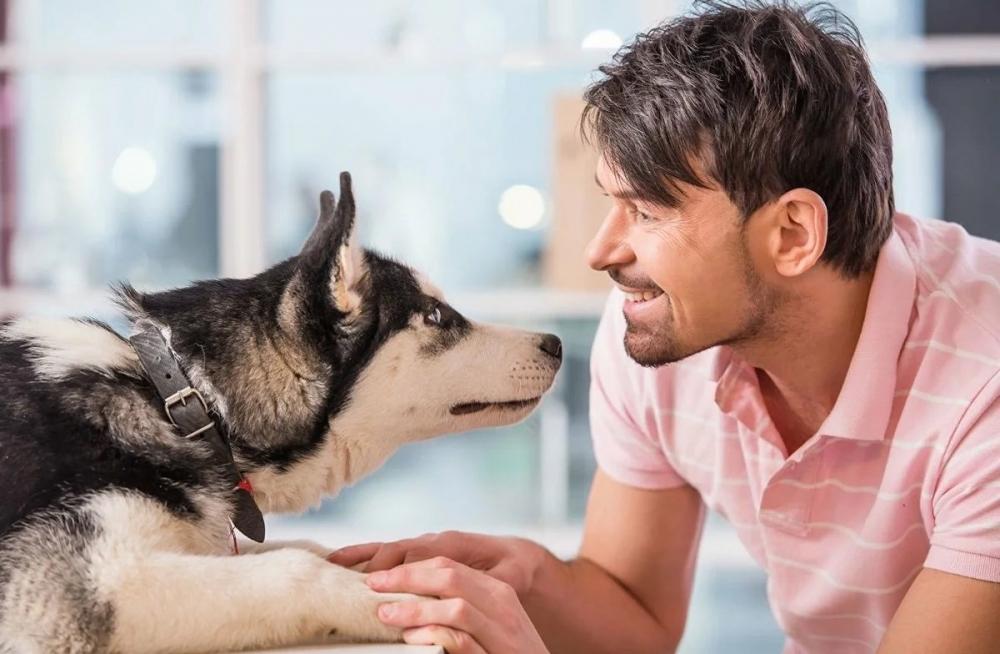 сделать родословную собаке без документов