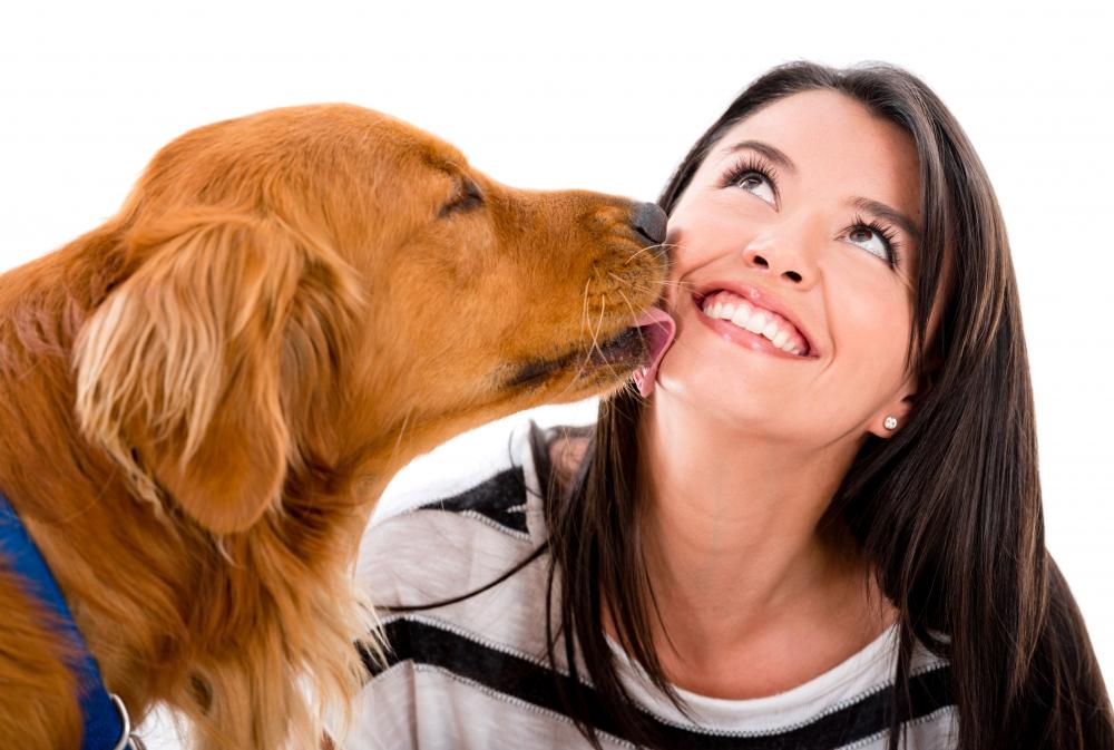 получить документы на собаку