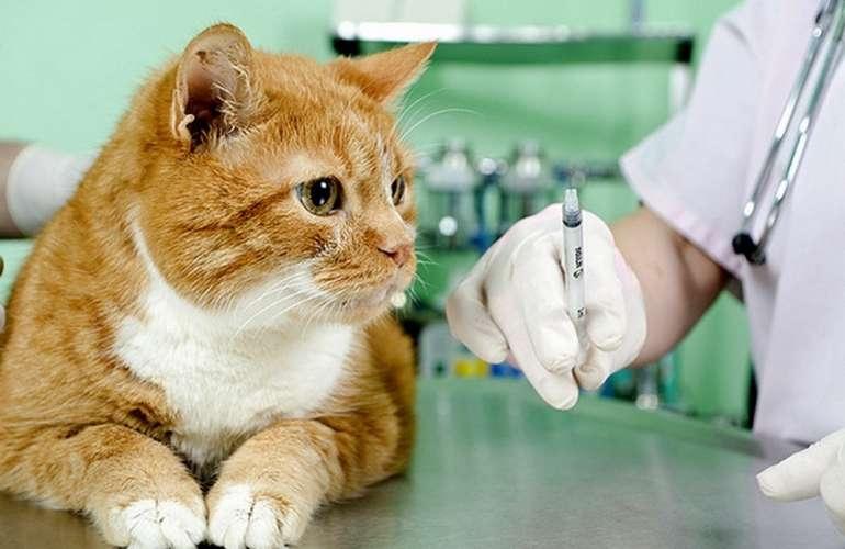 поставить укол кошке подкожно