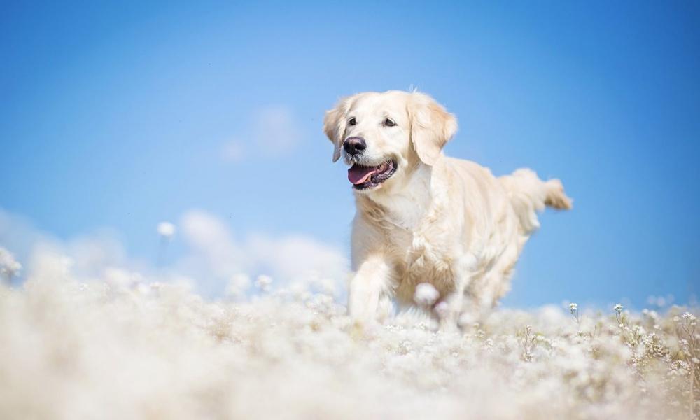как усыпить собаку безболезненно