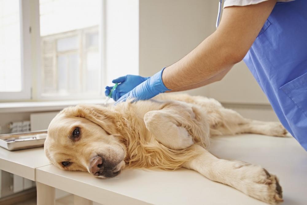 как усыпить собаку в домашних условиях самому