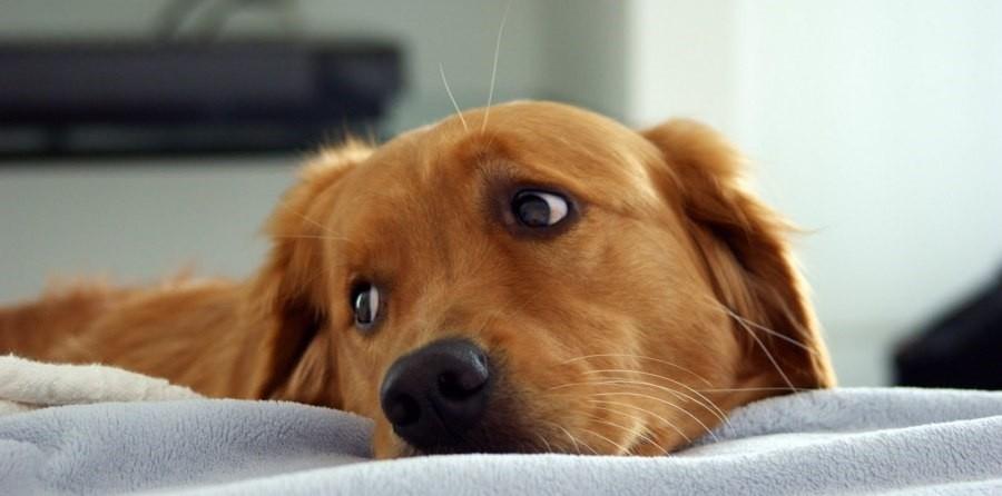 усыпление собак как это происходит