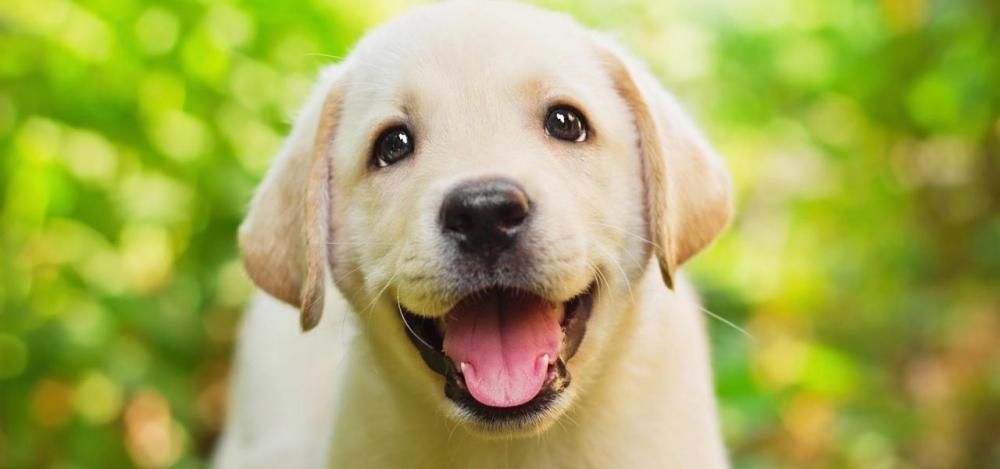 уход за собакой в домашних условиях