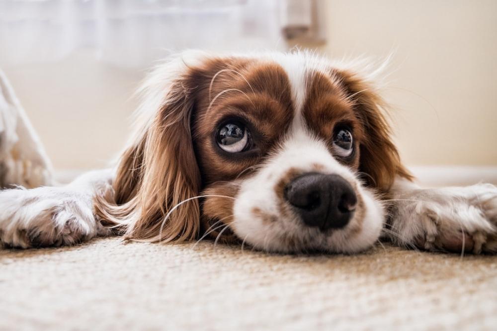 правильно ухаживать за собакой
