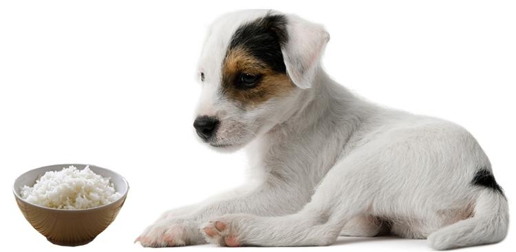 какие каши можно давать собакам
