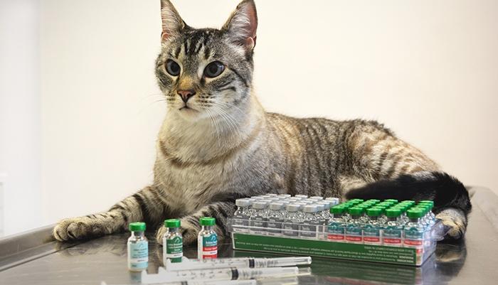 прививки кошкам по возрасту таблица