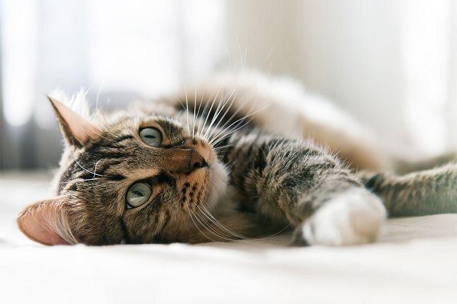 кишечная непроходимость у кошек