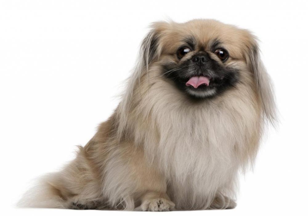 оригинальные клички для собак