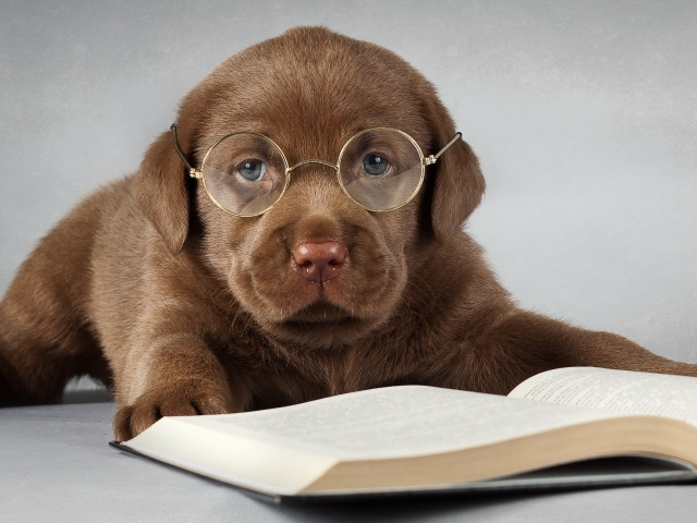 клички для собак со значением