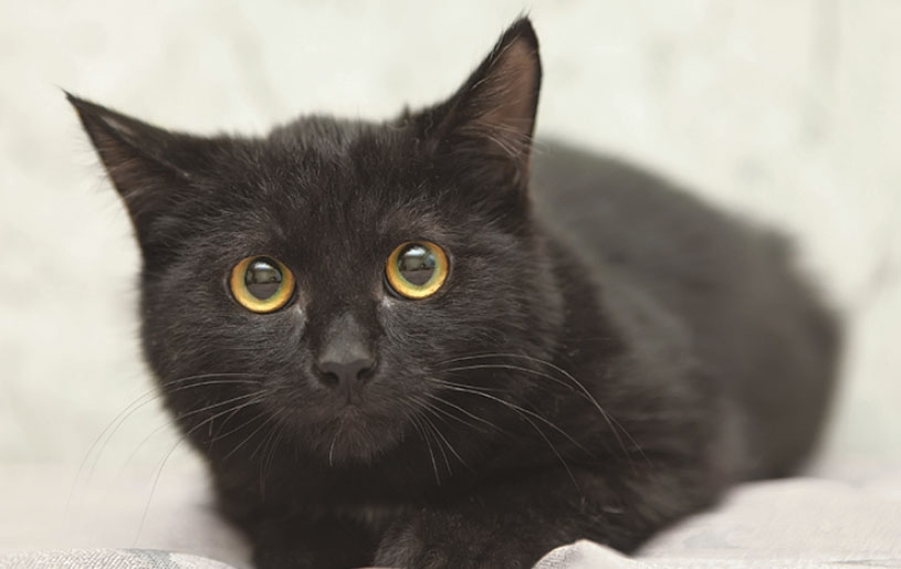 стерилизовать кошку после рождения котят