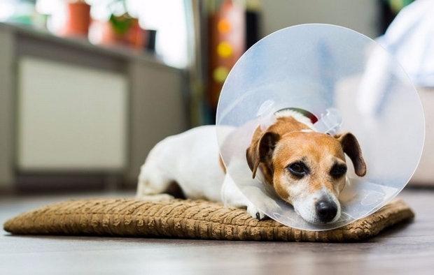 сколько стоит стерилизовать собаку