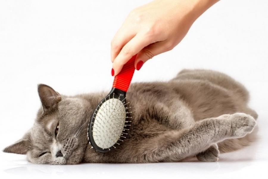 убрать колтуны у кота