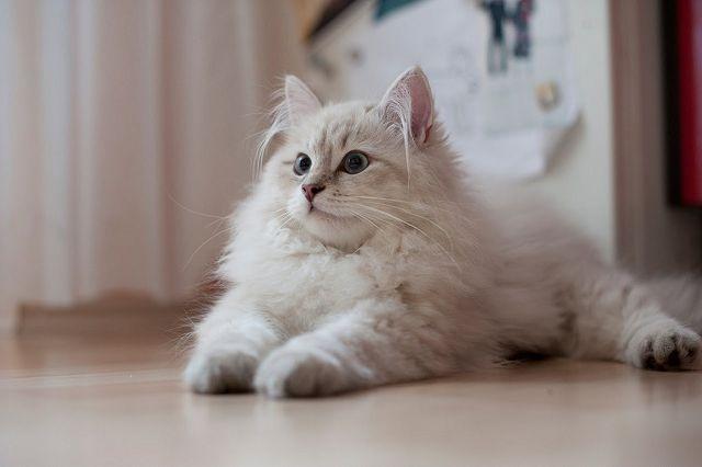 колтуны у кошки как избавиться