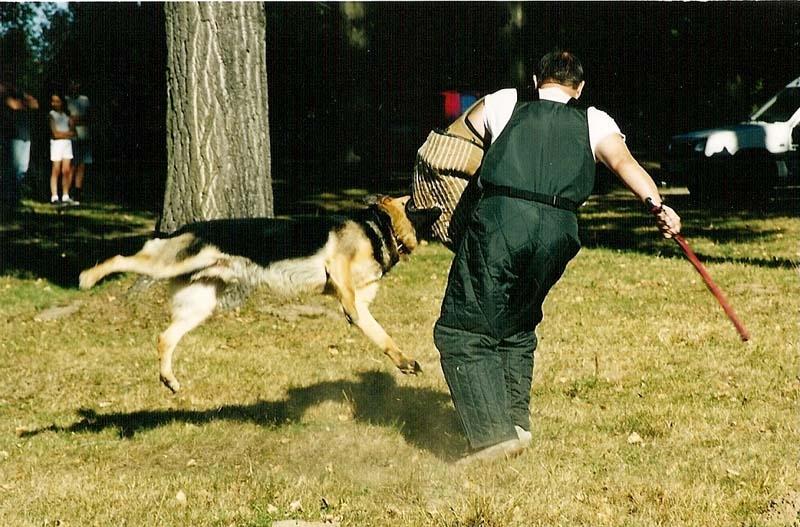 каким командам можно научить щенка