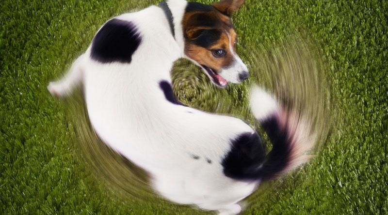 основные команды для собак