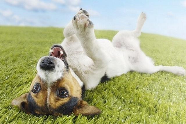 команды для дрессировки собак