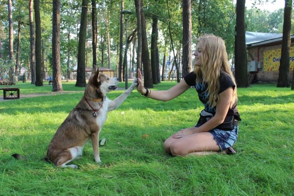 обучение щенка основным командам