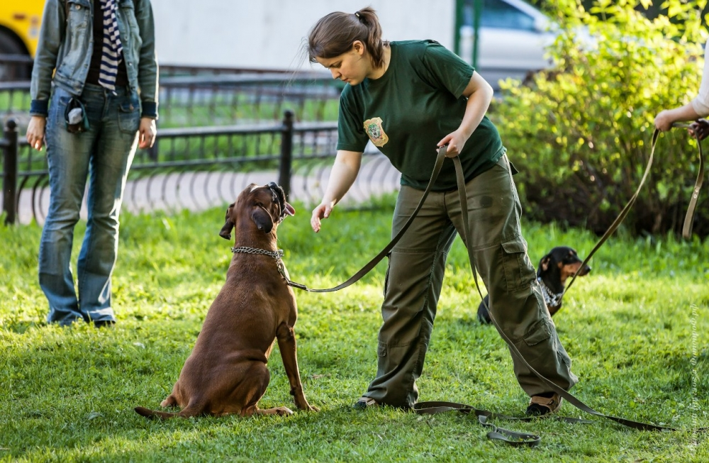 как научить собаку команде служить