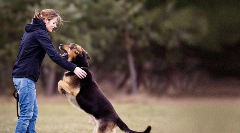 команды для собак список и как научить