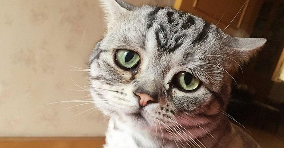 конъюнктивит у котят лечение в домашних условиях