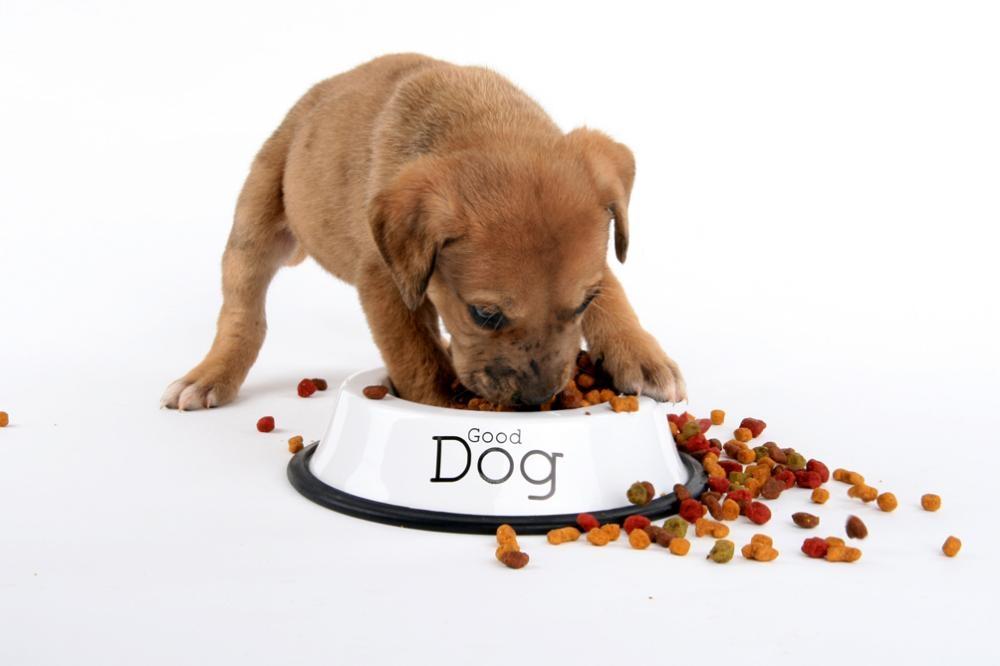 корма для собак премиум класса список